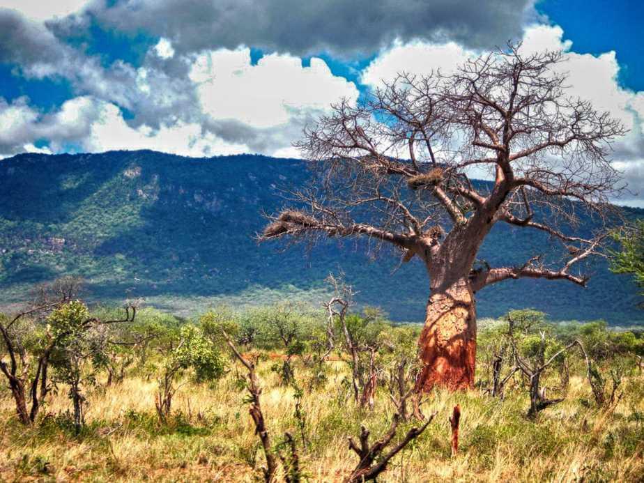 kenia-afrika-reise-bilder-070
