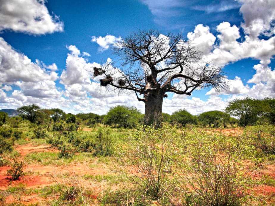 kenia-afrika-reise-bilder-076