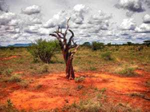Baum Rote Serengeti Kenia