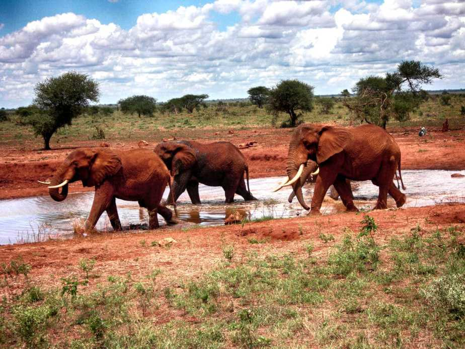 kenia-afrika-reise-bilder-114