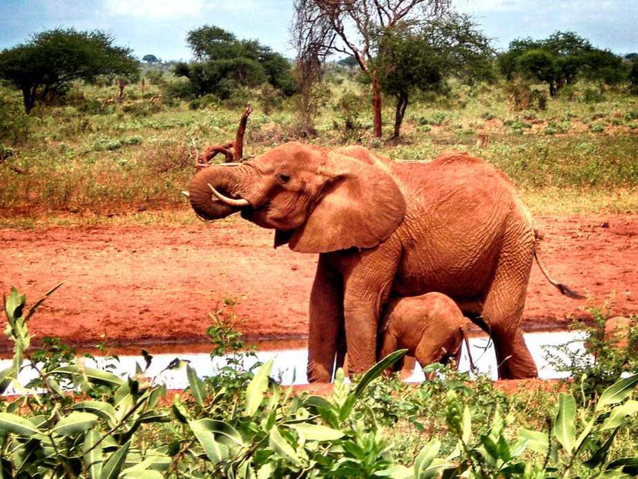 kenia-afrika-reise-bilder-127