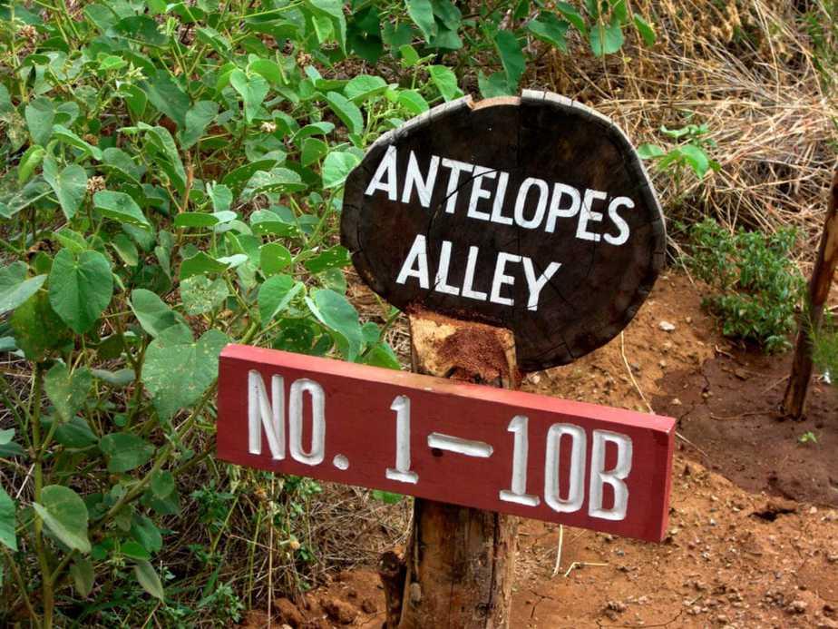 kenia-afrika-reise-bilder-330