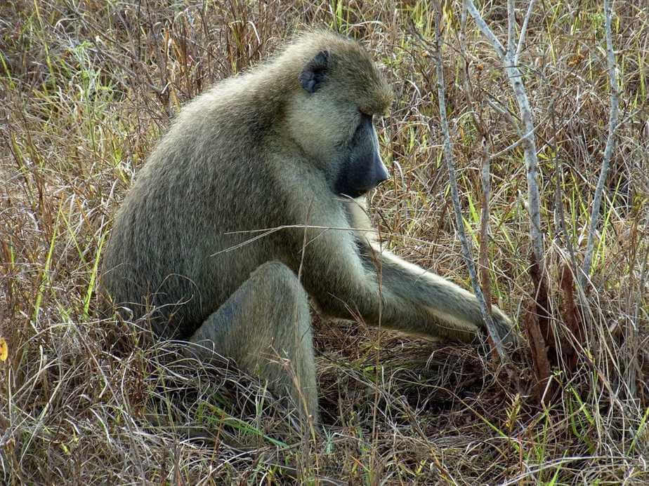kenia-afrika-reise-bilder-803