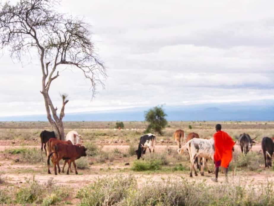 Massai Safari Afrika